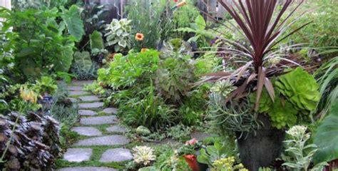 plantas para jardines 191 cu 225 les son las mejores plantas de exterior para jardines