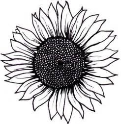 Sunflower Clip Outline by Sunflower Outline Clipart Best
