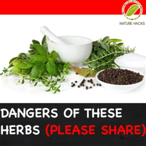 dangers of some herbs nature hacks natural solutions