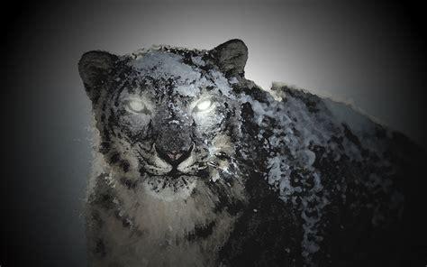 black snow black snow leopard by guidopata on deviantart