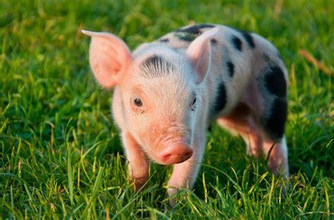 Be To Animals world animal foundation