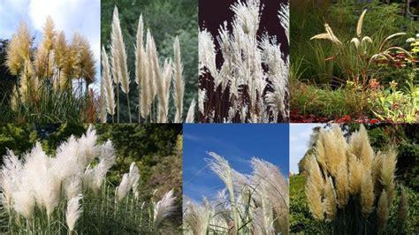 winterharte gräser garten blumen und stauden als sichtschutzgarten pflanzen