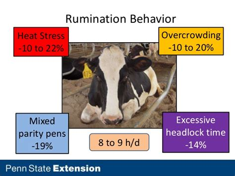 cow comfort troubleshooting design based cow comfort issues