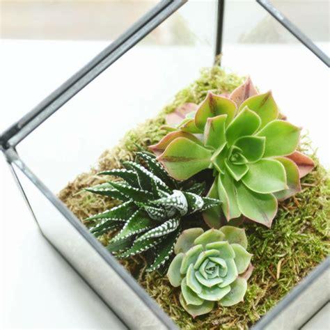 Deko Im Glas Ideen by Sukkulenten Im Glas Im Blickfang Kreative Deko Ideen Mit