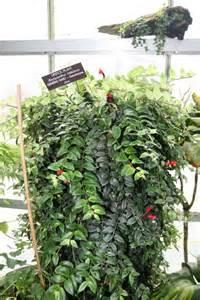 quelles plantes d int 233 rieur retombantes choisir