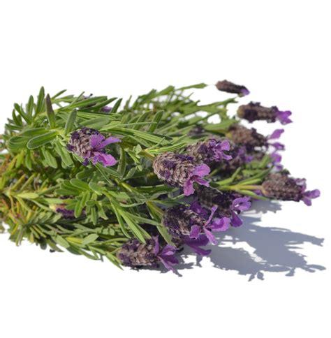Fragrance Lavender lavender fragrance range products