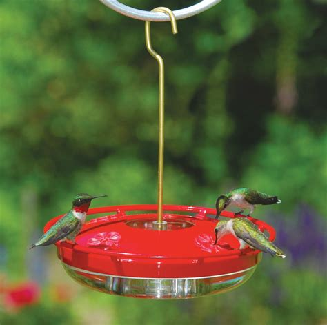 wild birds unlimited five popular fall bird feeding myths