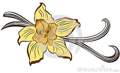 fiore della vaniglia fiore della vaniglia e baccelli della vaniglia fotografia