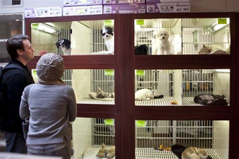 pet store that sells puppies u s city now legally requires pet stores to only sell rescue animals
