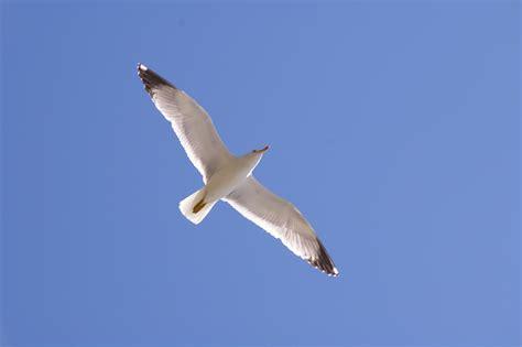 volo gabbiano gabbiano in volo viaggi vacanze e turismo turisti per caso