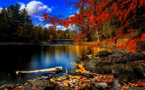 wallpaper hd desktop autumn fall free wallpaper desktop wallpapersafari