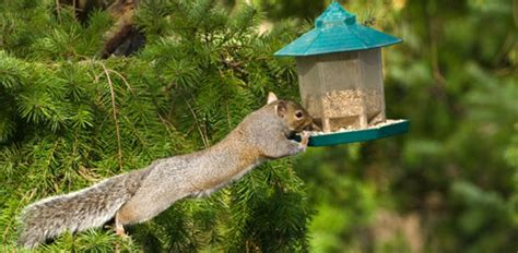 how to keep squirrels away from your bird feeder today s