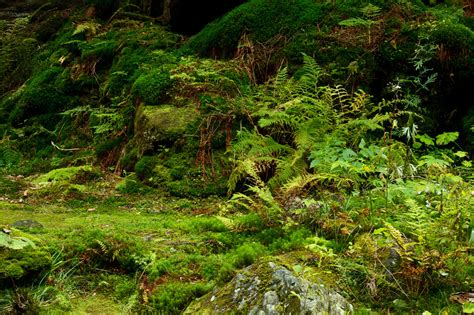 The Forest Floor by Moss On Forest Floor Free Stock Photo Domain Pictures