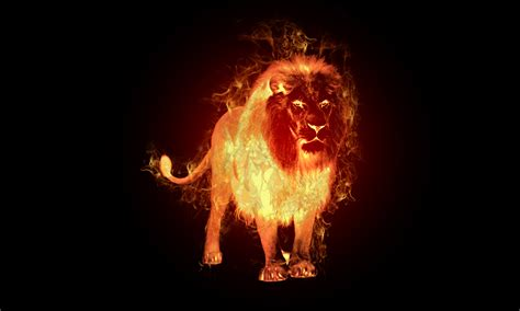 fire lion wallpaper gallery