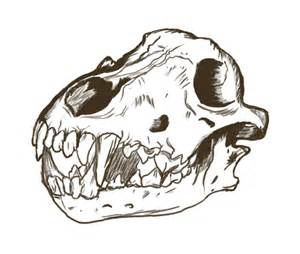 Wolf skull drawing conquer club view topic hand drawing