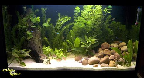 Aquascape Freshwater Aquarium Comment G 233 Rer La Territorialit 233 Du Guppy Animogen