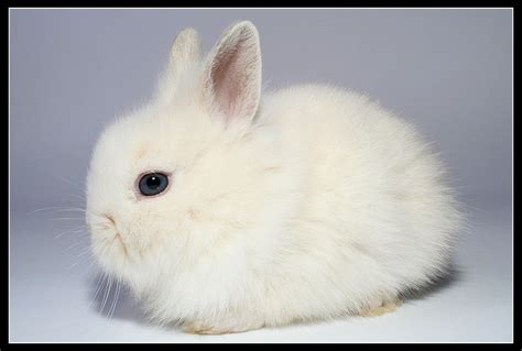 12 Md Rabbit Bery White berry the white rabbit by jordygraph on deviantart