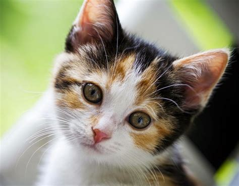 cat pictures top cats beautiful wallpapers wallpapers