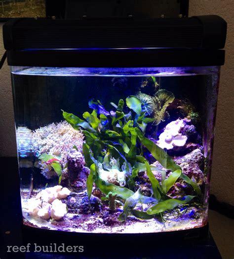 Lu Aquarium Model Jepit on with illumagic blaze led exclusive gear industry led lights reviews reef builders