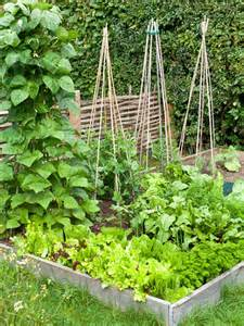 Small Veggie Garden Ideas Small Vegetable Garden Ideas Memes