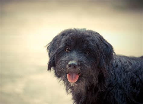 irritable bowel in dogs irritable bowel in dogs petmd