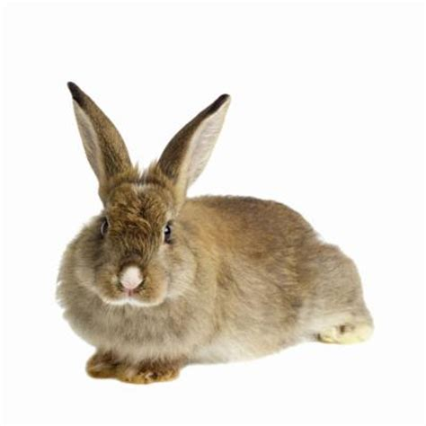how do i get rid of rabbits in my backyard how to get rid of mites on rabbits animals mom me