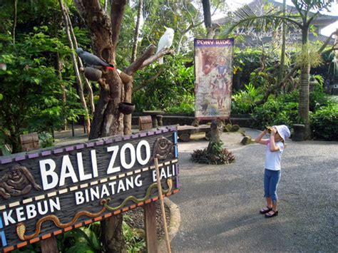 Bali Zoo Zoo With Lunch A Child bali zoo bali ubud tour