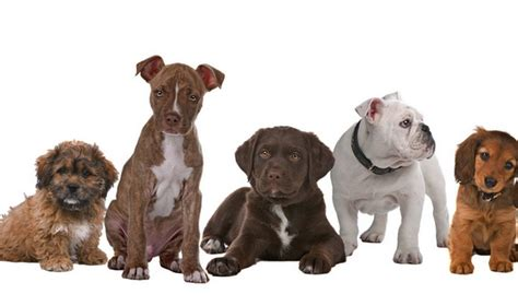 breed quiz best breed quiz to help you choose your next pup top tips