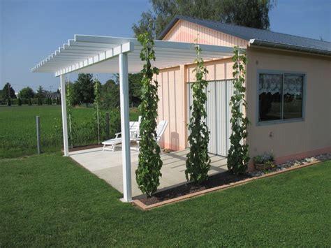 comment tailler une treille de raisin planter un espalier ou une palmette chez vous ma