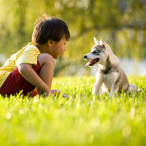 pet care teach proper pet care parenting