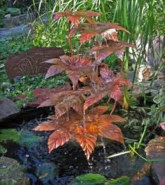 Copper castor bean water fountain contemporary landscape