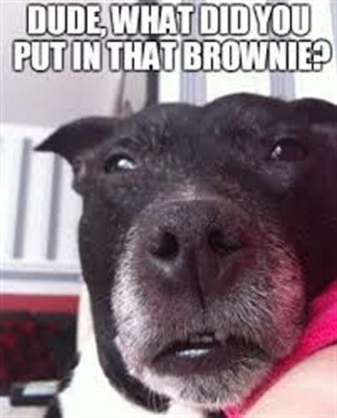 Stoner Dog Meme Generator - 1000 images about the stoned dog meme collection on