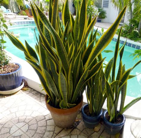 low light outdoor plants low light indoor plants you can decorate with