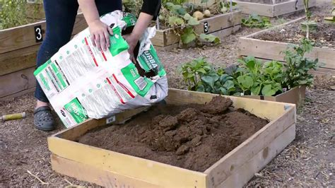 how to start a home vegetable garden how do i start a small vegetable garden in