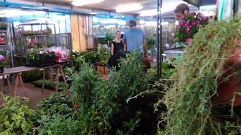 mercato dei fiori via trionfale 45 fiori spqr perdersi a roma