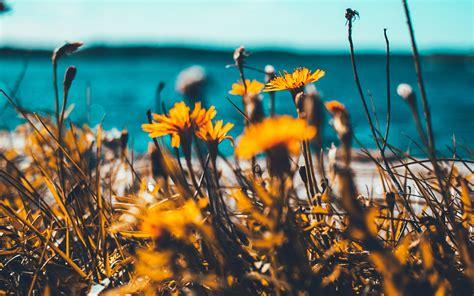 nu flower summer spring nature wallpaper