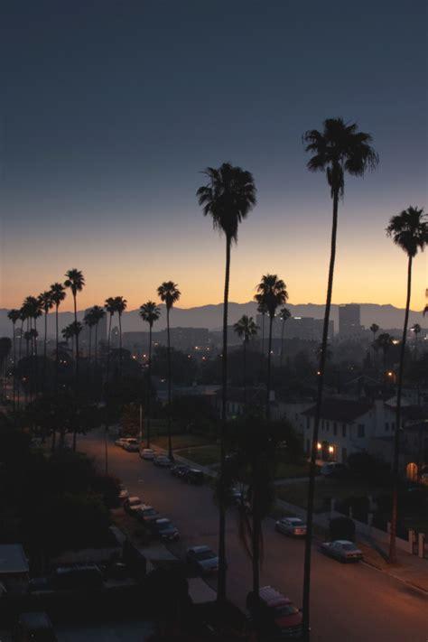 palm tree dreams tumblr