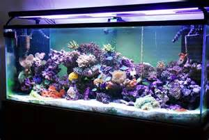 Aquascape Aquarium Supplies Reef Fish Tropical Aquarium Fish Liquid Therapy