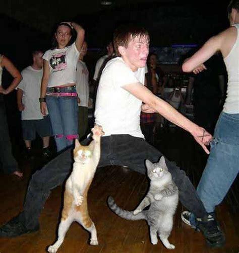 Dancing Cats 1Funny