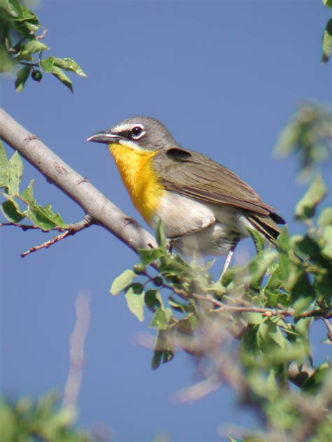 birds of southern arizona 10 best birding hotspots in southern arizona