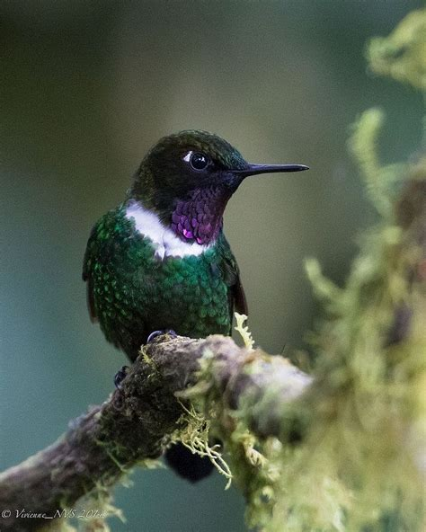 53 best little hummingbirds collection images on pinterest