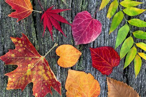 Welche Kaminarten Gibt Es by Herbst Bilder Lustig Endlich Herbst Lustige Bilder Spr