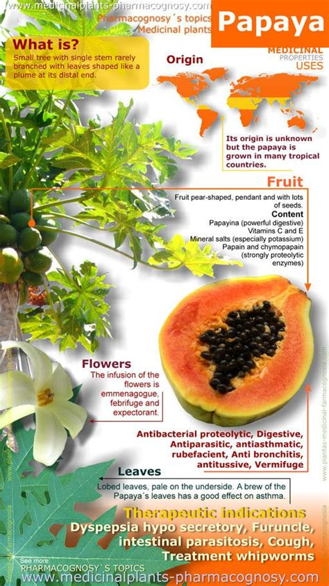 Papaya For Health And by Papaya Benefits Infographic Summary Of The General