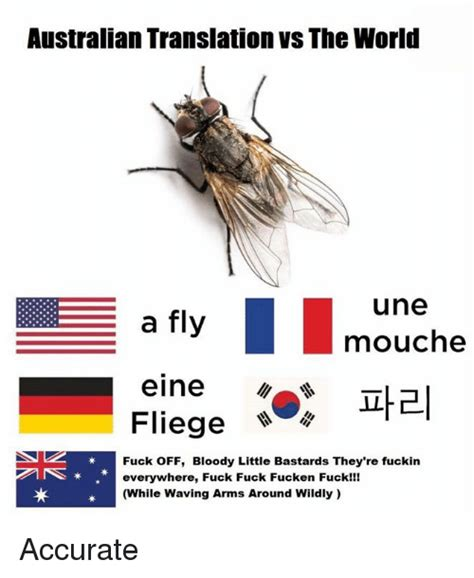 Fly Meme - funny bloody memes of 2017 on sizzle chewing loudly