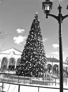 a black and white christmas tree long island daily photo