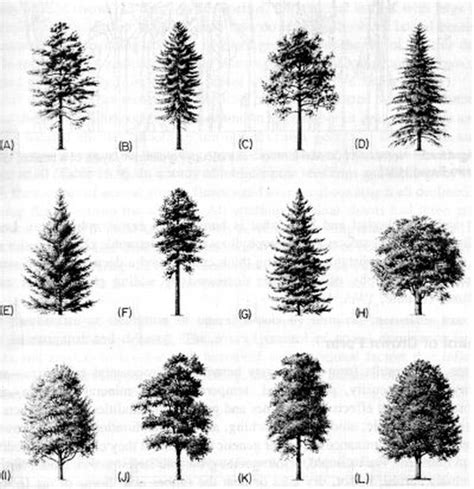 Parts of a tree use shape or silhouette to identify a tree