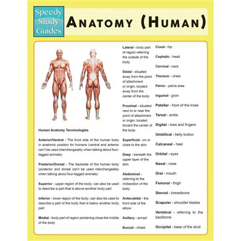 study guide for the human in health and illness 6e books anatomy human speedy study guide