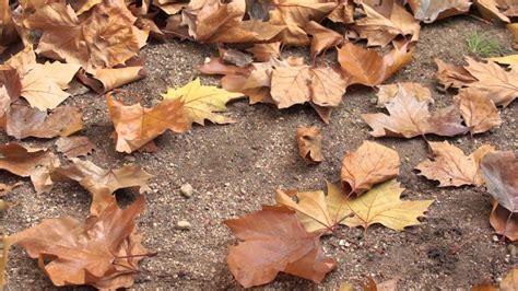 imagenes de hojas otoñales hojas en oto 241 o youtube