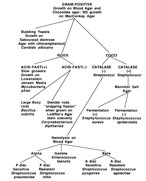 gram positive bacilli flowchart gram negative bacilli flowchart click on gram positives