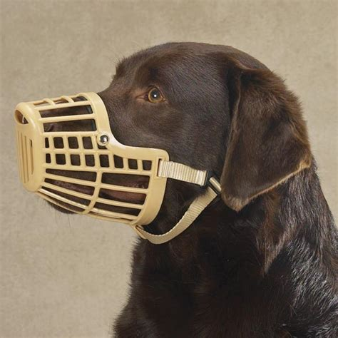 muzzles for dogs owner responsibility page 32